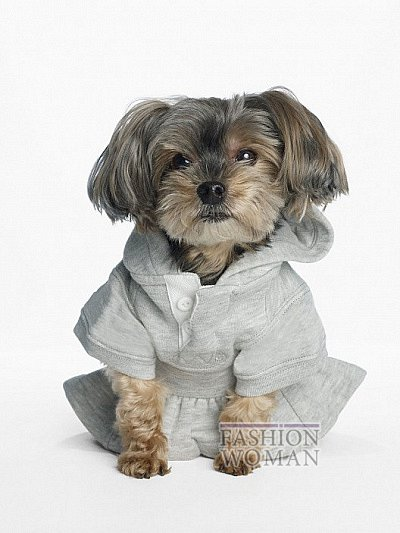 Одежда для собак от Ralph Lauren