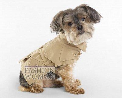 Одежда для собак от Ralph Lauren фото №5