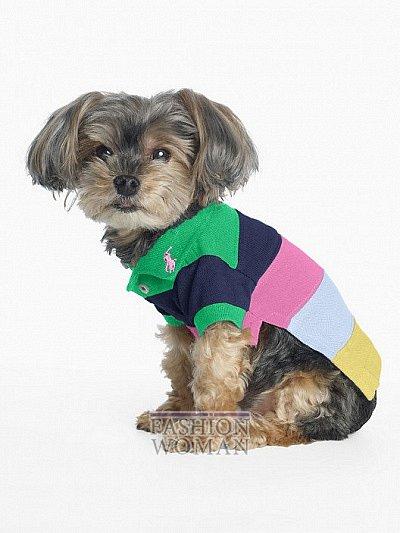 Одежда для собак от Ralph Lauren фото №6