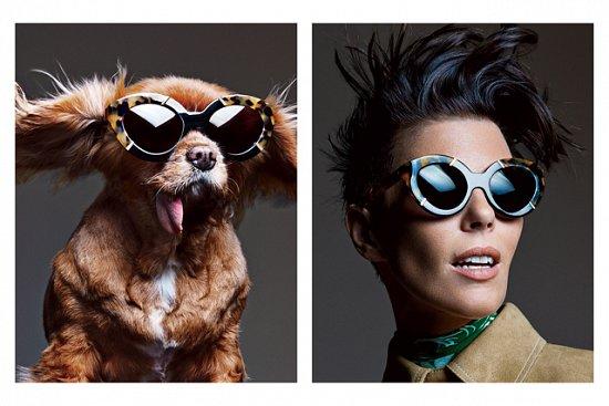 Собака стала лицом рекламной кампании Karen Walker фото №15