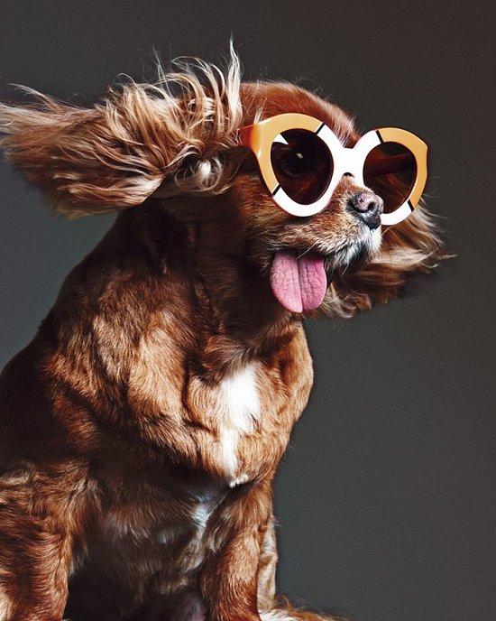 Собака стала лицом рекламной кампании Karen Walker