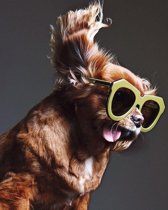 Собака стала лицом рекламной кампании Karen Walker фото №3