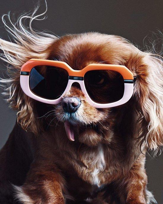 Собака стала лицом рекламной кампании Karen Walker фото №4