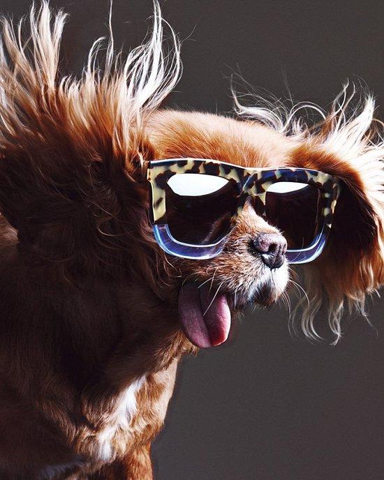 Собака стала лицом рекламной кампании Karen Walker фото №5