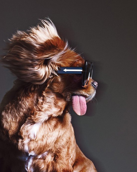 Собака стала лицом рекламной кампании Karen Walker фото №8