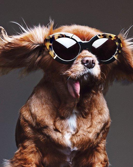 Собака стала лицом рекламной кампании Karen Walker фото №9