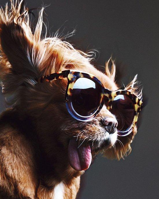 Собака стала лицом рекламной кампании Karen Walker фото №10