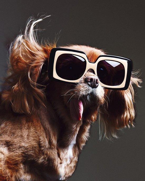 Собака стала лицом рекламной кампании Karen Walker фото №12