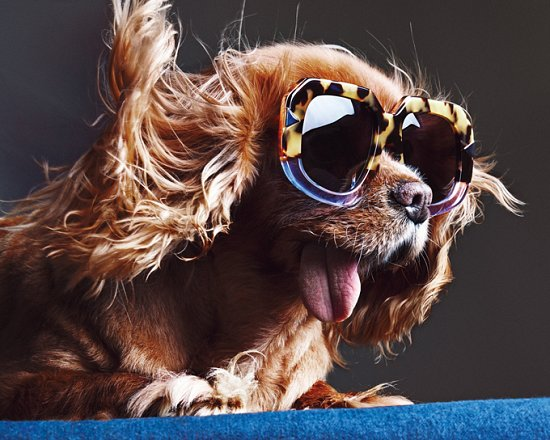 Собака стала лицом рекламной кампании Karen Walker фото №13