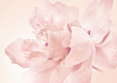 Новый аромат от Issey Miyake - A Scent Eau de Parfum Florale